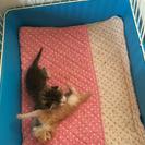 生後一週間程度の子猫