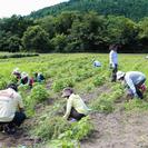 第2回トリコになる農業体験&ピクニック!