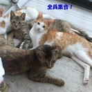 さくら猫(耳先カット猫)親子4匹まとめてがありがたいですが、お気...