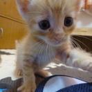 【問い合わせ終了】保護子猫達の里親募集【7月6日誕生】