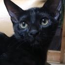 生後3カ月の黒子猫