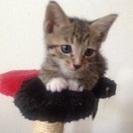 子猫の里親さん募集します。