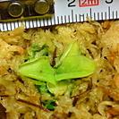 食虫植物 欧州高山のムシトリスミレ Pinguicula gra...