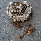 害虫駆除、蜂の巣撤去、ゴキブリ駆除、毛虫駆除やります! - 便利屋