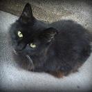 ★黒猫フッサーラ●高齢者歓迎横浜駅近く