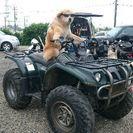 バイク整備アシスタント募集! − 神奈川県