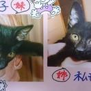 黒猫の仔猫 姉妹 生後3ヶ月