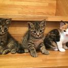 とてもとても可愛い子猫達【3匹とも相談中です】