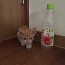 至急求む 子猫の里親。お願いします。