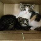 再募集 仔猫2匹一緒にお願いします