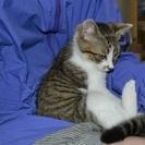 子猫の里親を募集しています。 − 岩手県