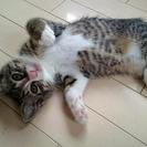 元気な子猫の里親さんを募集しています