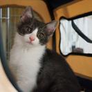 元気な子猫の里親さんを募集しています − 茨城県