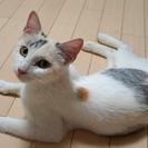 元気な子猫の里親さんを募集しています - 里親募集