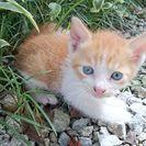 1ヶ月の兄妹猫です☆ - 猫