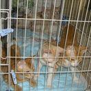 迷い猫が産んだ子猫六匹の里親さんを急募!!