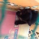 お願いします🙏    生後1ヶ月ぐらいの子猫です。
