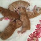 子猫 5匹