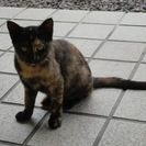 子猫(生後半年ほど)3匹の里親募集