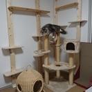 猫専用個室『ねこべや』ケージレスのペットホテル【送迎無料】|藤沢・...
