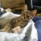 我が家の可愛い子猫をもらって下さい。