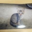 群馬県館林市 6月生まれの子猫4匹→3匹