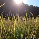 ◆豊田市後援◆収穫祭!生きものを守る田園で素手での稲刈り体験