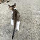生後2ヶ月の子猫の里親募集!