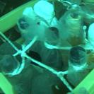 南島原市感動体験プログラム『海底貯蔵酒』