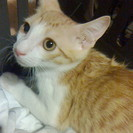 人懐っこくて可愛い赤ちゃん猫貰って!