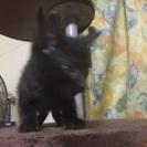 男の子の遊びざかりの甘えん坊の保護猫です