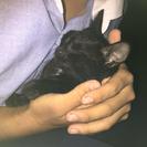 捨て猫黒い子猫2匹里親募集!