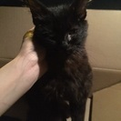 4、5カ月ほどの黒猫です !