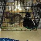 野良猫3匹保護しています