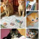 保護した子猫達。