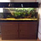熱帯魚用水槽 さしあげます。