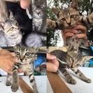 生後2ヶ月半の子猫4匹です(o^^o)