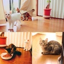 2016年5月生まれ2匹子猫