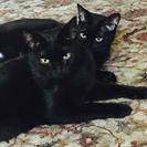 別の黒猫ガール(後ろの子)