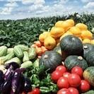野菜の配達します!
