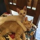 生後3ヶ月の猫