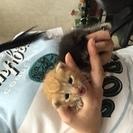 かわいい子猫の兄妹です!