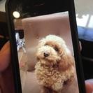 【急募】迷子の迷い犬、引き取って下さる方募集しています