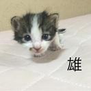 生後3週間の子猫の里親募集