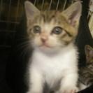 生後1ヶ月の子猫2匹宜しくお願いします