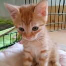 トラ猫の親子の里親募集 血液検査済(エイズ白血病検査陰性)