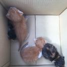 野良猫が屋根裏で子供を産んでました