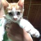 牧場で生まれた子猫です。