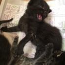子猫の兄弟保護しました。