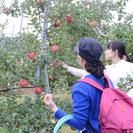 りんご狩りをしませんか?自分でとったりんごをお売りします!